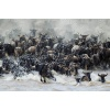 africa_together_adri_de_visser__wildebeast_